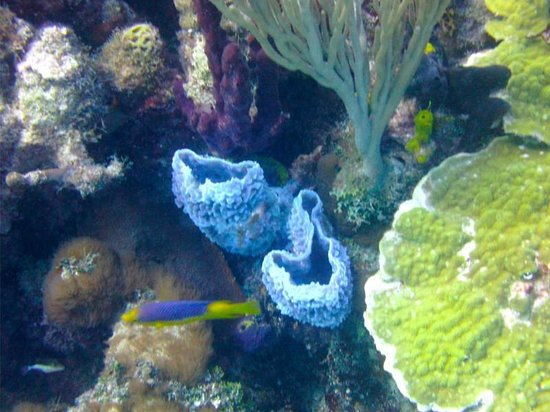 Bahama Divers : Best colors of 2nd dive