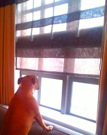 Kimpton Hotel Palomar Philadelphia : Minnie Pearl thoroughly enjoyed watching the snow fall upon the city from her warm & comfy sofa!