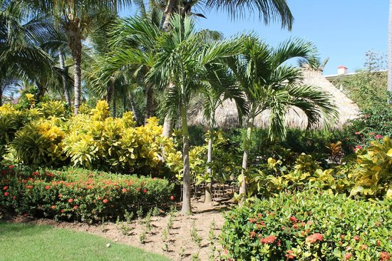 Paradisus Palma Real Golf & Spa Resort : Gorgeous Gardens on the Property