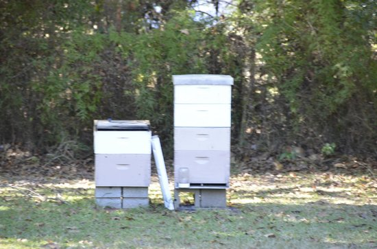 Woodridge Bed and Breakfast of Louisiana: Bee hives to harvest their own honey