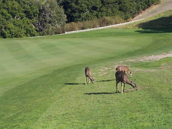 Carmel Valley Ranch Golf Course: Golf course 2