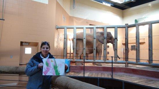 Zoo Atlanta: Elephant paints us a picture