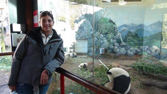 Zoo Atlanta: Just us and the pandas