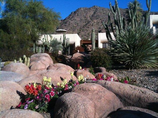 JW Marriott Scottsdale Camelback Inn Resort & Spa: Property Grounds/Gardens