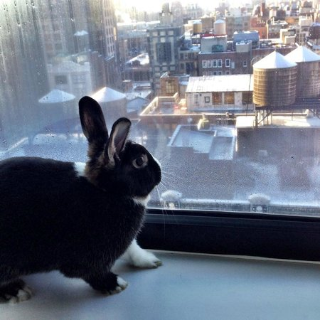 Holiday Inn NYC - Manhattan 6th Avenue - Chelsea: Even pet rabbits feel at home in the Holiday Inn.