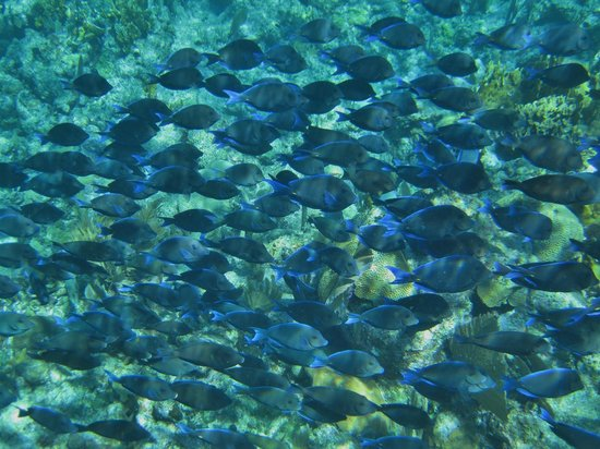 West Bay, Honduras: Just a few fish.