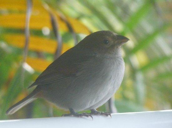 Hotel Amaudo: Petit oiseau qui venait picorer ...