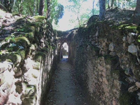 Museo y Ruinas Mayas Cahal Pech: pathway