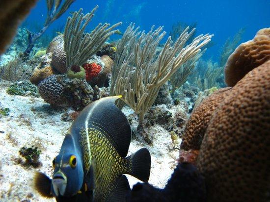 Buceo Caribe Azul