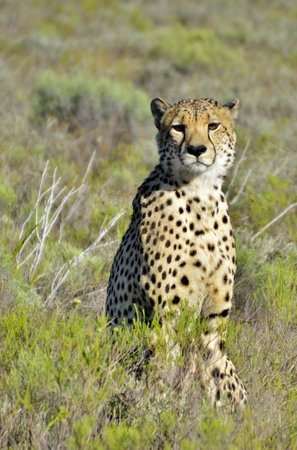Shamwari Game Reserve Lodges: Cheetah - these guys were the hardest to find!