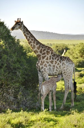 Shamwari Game Reserve Lodges: Too cute