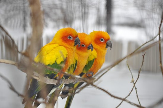 The Tracy Aviary: They were huddling together to stay warm I suppose