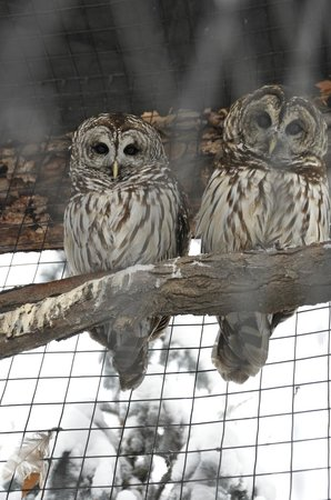 The Tracy Aviary: These owls were really watching me