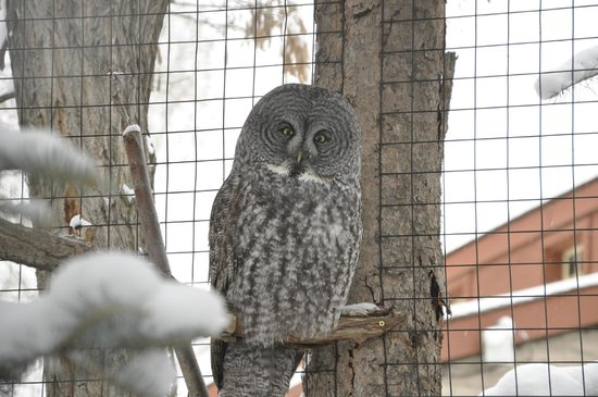 The Tracy Aviary: Owl