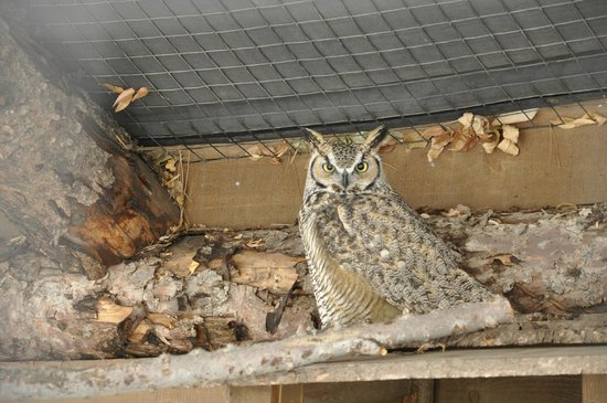 The Tracy Aviary: owl in cage