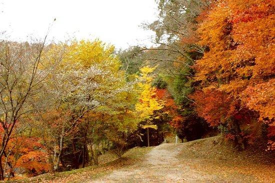Obara Fureai Park / Shikizakura: Obara Fureai Park in November