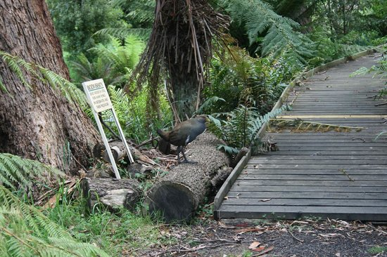 Devonport, Australia: Entrance to fernery