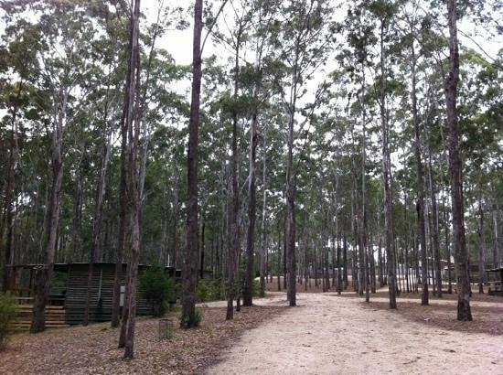 Lakes Entrance Log Cabins: lovely cabins within a gum tree forest!