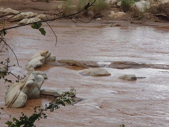 Sarova Shaba Game Lodge: you can just see Mr Croc on the rock!