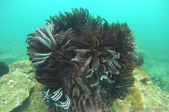 Tunku Abdul Rahman Marine Park : Scuba diving and Snorkeling at TARP