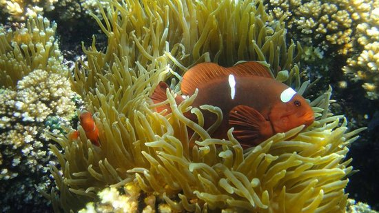 Tunku Abdul Rahman Marine Park: Scuba diving and Snorkeling at TARP