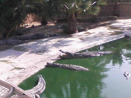 Djerba Explore: Crocos