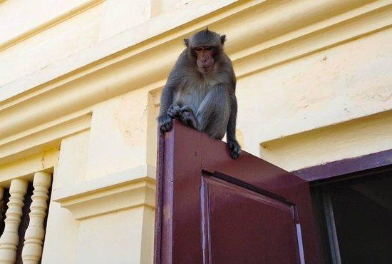Silver Pagoda: Macaco fuori dalla Pagoda