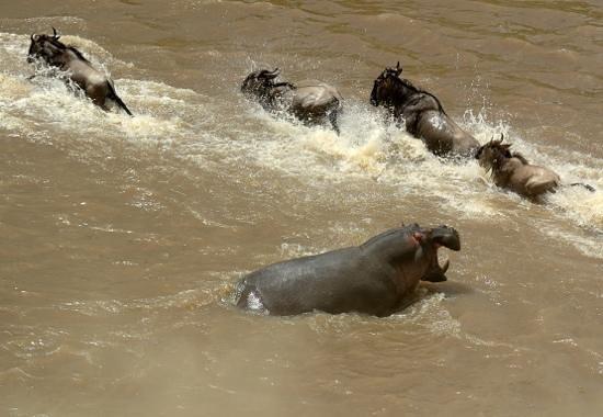 Enkewa Camp : hippo