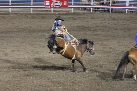 Buffalo Bill Cody Stampede Rodeo: Cody Rodeo