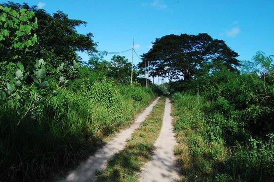 Bahay Kalipay Detox Retreat: walk to the beach in 5-10 minutes
