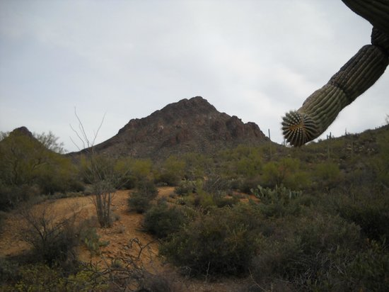 Tucson Mountain Park: Ridge
