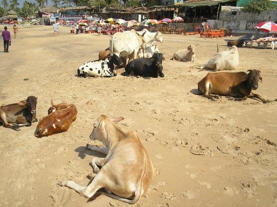 Baga, الهند: Бага