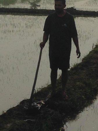 Templeberg Villa: Nearby rice paddy and farmer