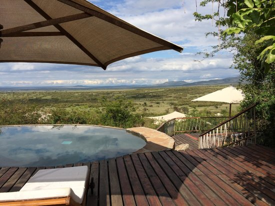 Mara Bushtops: The gorgeous view from the pool deck