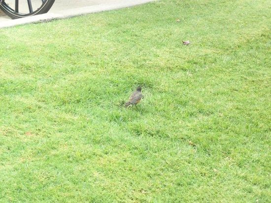 Carriage House Inn: Bird