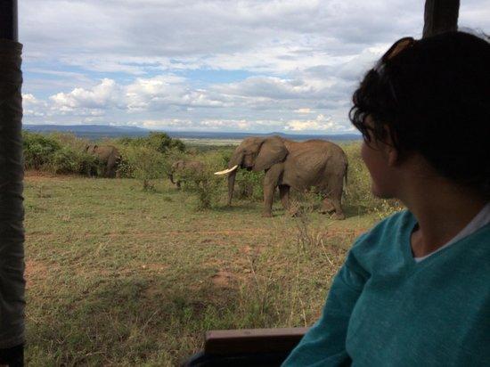 Mara Bushtops : Our first day on safari