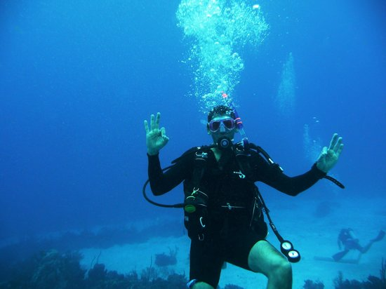 All Definitely OK Picture Of Living The Dream Divers Seven Mile Beach T
