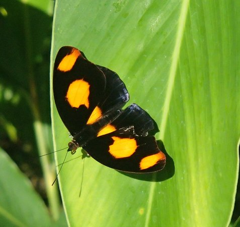 The Butterfly Farm (La Ferme des Papillons): Each species has its preferred kind of leaf