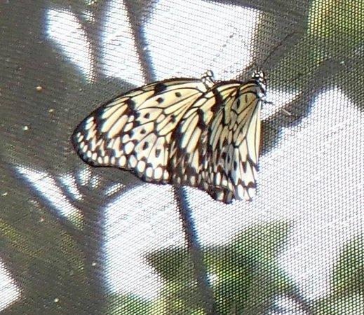 The Butterfly Farm (La Ferme des Papillons): Romance, butterfly style