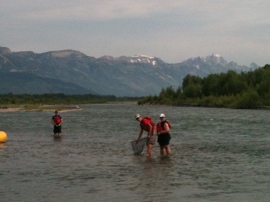 Teton Scenic Floats and Fly Fishing: A fun day on the Snake River.  Catching a few too!