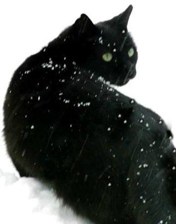 Black Cat Restaurant Sharon Springs