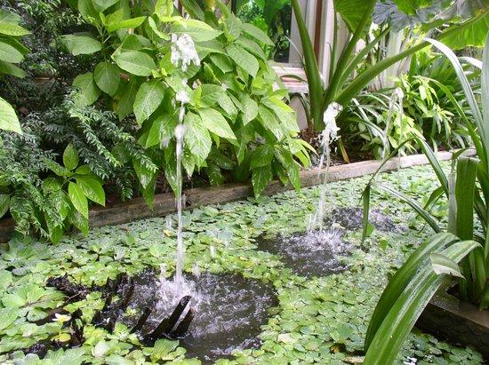 Siem Reap Evergreen Hotel: Территория