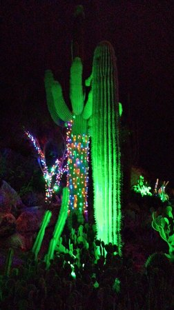 The Phoenician, Scottsdale: Christmas Cactus