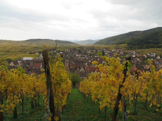 Regioscope Tours: Beautiful view over the Alsatian wine trail, thanks Chloe!