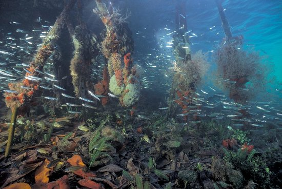 Island Roots Charters: Bait fish in Hurricane Hole, St. John