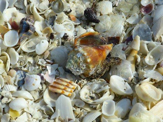 Marriott's Crystal Shores: Some beach shells