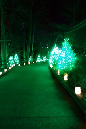 Walking Through a Christmas Tree Forest - Smelled like Christmas ...