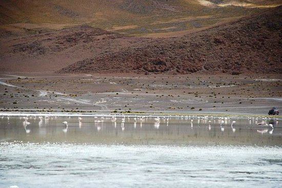 Eduardo Avaroa National Reserve of Andean Fauna : Flamingos