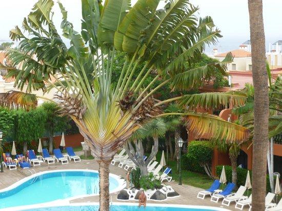 Colon Guanahani - Adrian Hoteles: L'arbre du voyageur, côté piscine
