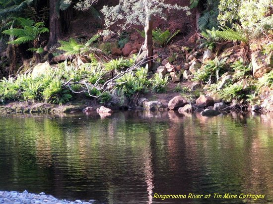Tin Dragon Trail Cottages: Ringarooma River - home of Platypus